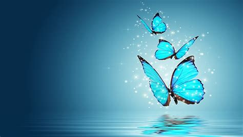 Butterfly Home Screen Wallpaper Images by 20 Beautiful Free Butterfly Backgrounds Freecreatives