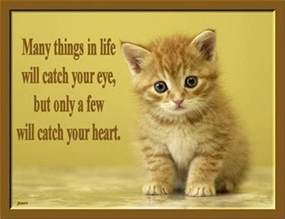 Cats Quotes About Love