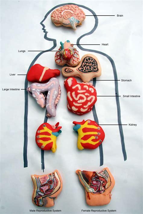 anatomically correct human organ pastries chocolate teeth