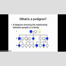 What Is A Pedigree Youtube