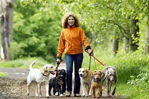 how to choose the right dog walker With the dog sitter