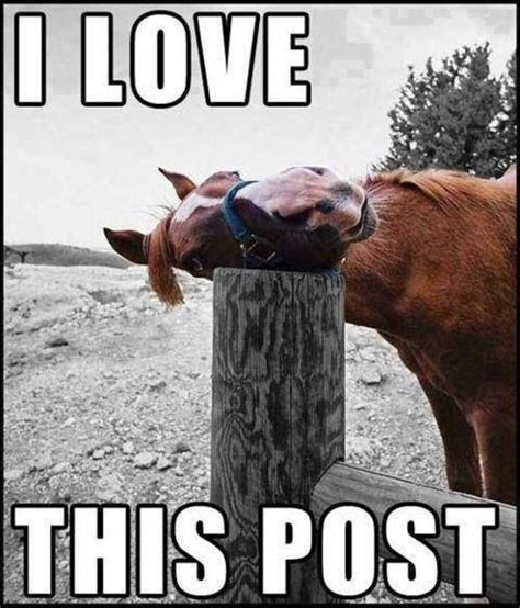 Horse Meme - meme page 9 pirate4x4 com 4x4 and off road forum