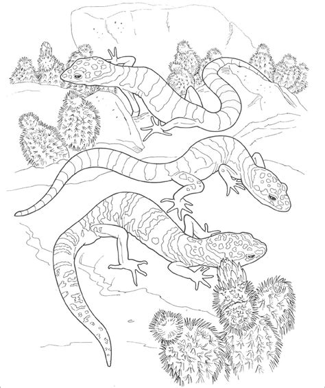 desert animals coloring page coloringbay
