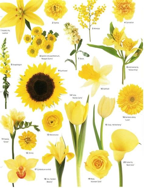 type of flowers 25 best ideas about flower types on pinterest wedding flower guide types of flowers and