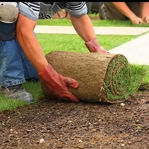Rouleau Gazon Naturel : gazon naturel en rouleau am ricain ~ Melissatoandfro.com Idées de Décoration
