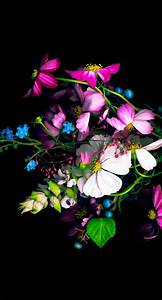 Colorful flower black   wallpaper.sc iPhone6sPlus