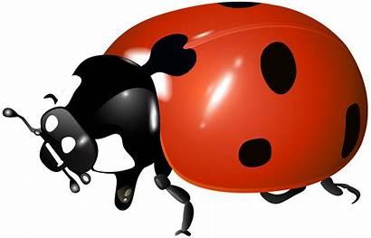 Ladybug Transparent Clipart Yopriceville