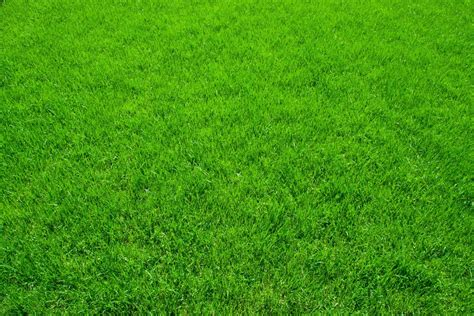 green grass how to stay cool in the summer virginia green lawn care company