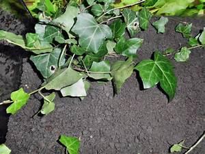Pflanzen Terrarium Einrichten : einrichten eines schnecken terrariums ~ Orissabook.com Haus und Dekorationen