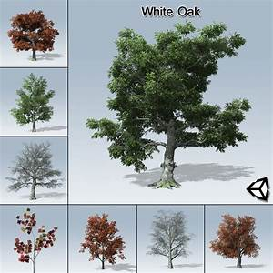 White Oak (Unity) – SpeedTree