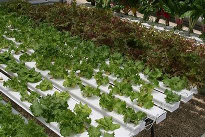 Hydroponic Systems Greenhouse Garden Overview Articles