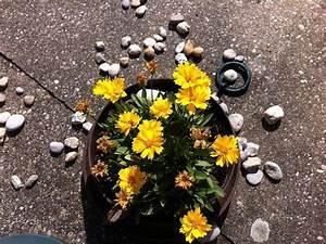 Blumen Im Urlaub Bewässern : kleine blument pfe sicher bew ssern ~ Watch28wear.com Haus und Dekorationen