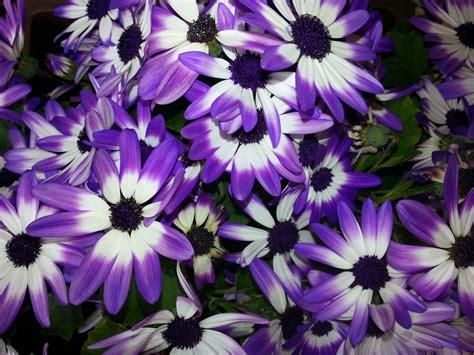 Types of Purple Flowers Names