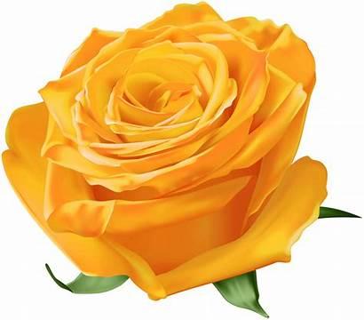 Orange Transparent Rose Roses Clipart Yopriceville