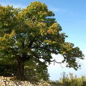 L Arbre Du Kiwi : quels arbres fruitiers tailler en janvier ~ Melissatoandfro.com Idées de Décoration
