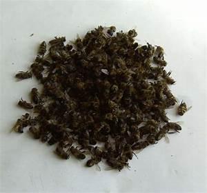 Народные средства от простатита тыквенные семечки