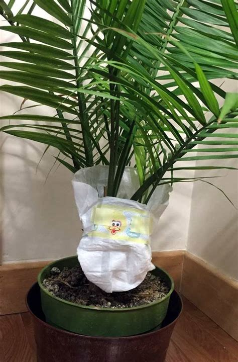 hometalk  baby diapers  plant soil nourishment