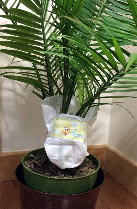 put your baby plants in diapers gardening home decor