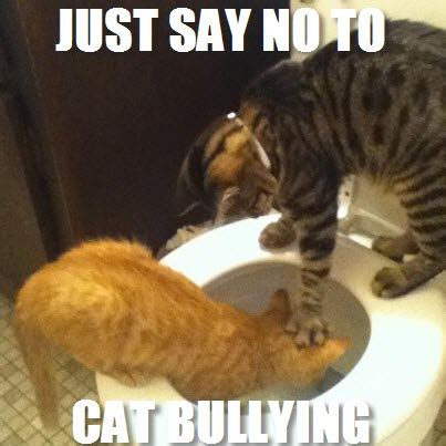cat bullying bully kitty kitties tiny bad gingers even please 23rd february bullies allowed