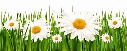 Grass Clipart Flowers Cliparts Rumput Flower Clip