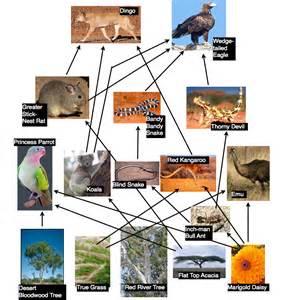 Australian Desert Food Web