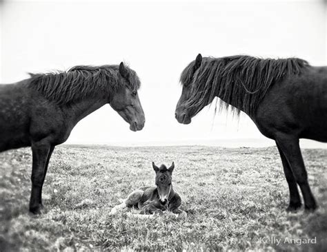 horse photograph baby 8x10 something request order custom