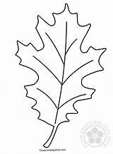 Coloring Leaf Autumn Oak Pages Templates Flowers sketch template