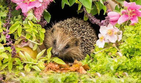 Igel Im Garten Willkommene Nuetzlinge by N 252 Tzlinge Im Garten 10 Tierische Helfer Die Sie Kennen