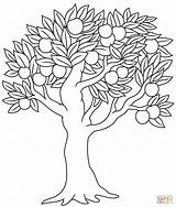 Coloring Tree Apple Printable Dot sketch template