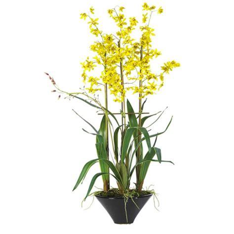 duree de vie d une orchidee en pot orchidee oncidium stessy fleurs