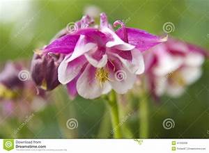Fleur Rose Et Blanche : fleur blanche rose la pilounette ~ Dallasstarsshop.com Idées de Décoration