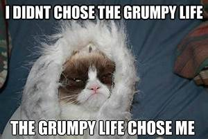 The Grumpy Life | Grumpy Cat | Know Your Meme