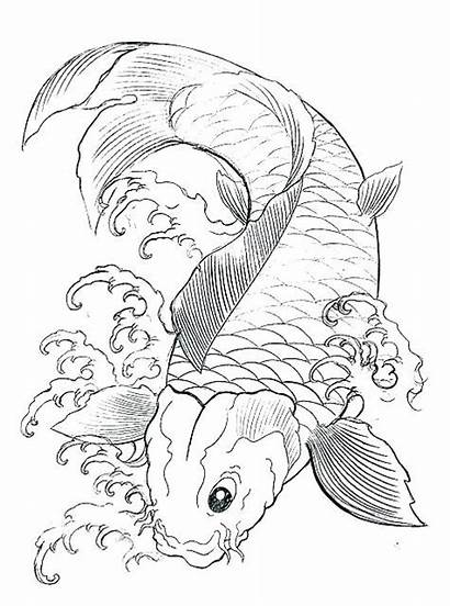 Fish Coloring Realistic Pages Tropical Printable Getcolorings