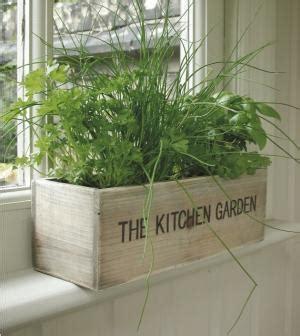 plante pour cuisine les joies des aromates en cuisine des cuisines aviva