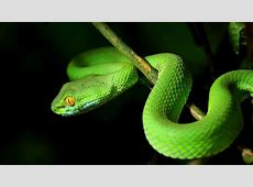 Deadly snake found on African ship SAFETY4SEA