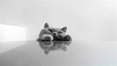 Cat Funny Wallpapers Nu