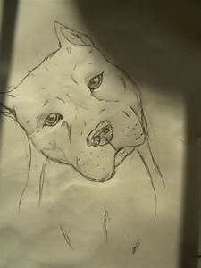 The gallery for --> Cool Drawings Of Dogs Pitbull