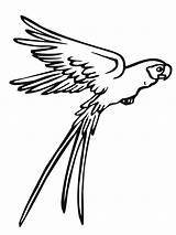 Parrot Coloring Pages Flying Printable sketch template