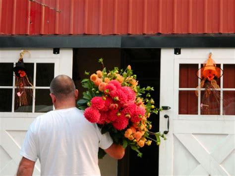 how to take care of dahlias in a pot dahlia care dahlia barn