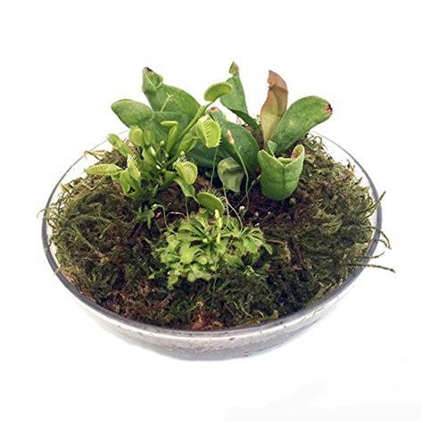 Top 10 Best Carnivorous Plants Terrarium Kit  Top Reviews