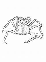 Crab Coloring King Drawing Printable Crustacean Crabs Drawings Template Bestcoloringpagesforkids Hermit Cartoon Categories 1600px 91kb 1200 sketch template