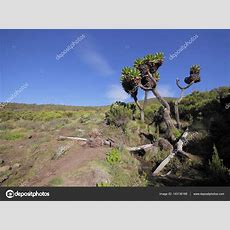 Mt Kilimanjaro National Park — Stockfoto © Yurybirukov