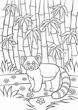 Panda Bamboo Coloring Drawing Forest Getdrawings sketch template