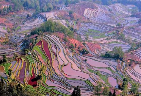 yuanyang rice terraces yuanyang rice terraces travel guide in january february