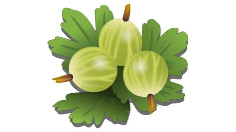 free clipart downloads downloads 7 gooseberry fruit royalty free clipart fruit