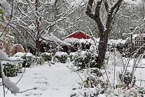 Sträucher Für Garten : bunte str ucher und stauden f r den winter garten ~ Buech-reservation.com Haus und Dekorationen
