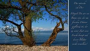 Baum Am Wasser : wie ein baum am frischen wasser foto bild ~ A.2002-acura-tl-radio.info Haus und Dekorationen