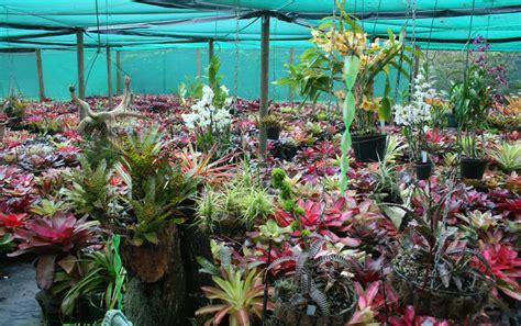 bromeliads australia nursery heart garden online plant nursery mail order plant nursery
