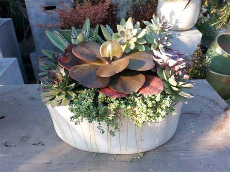 succulent dish garden container gardening tended