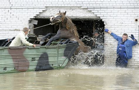 Horses On A Boat by Mckinsey Journalist